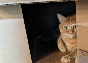 Orange tabby cat lounging in a box